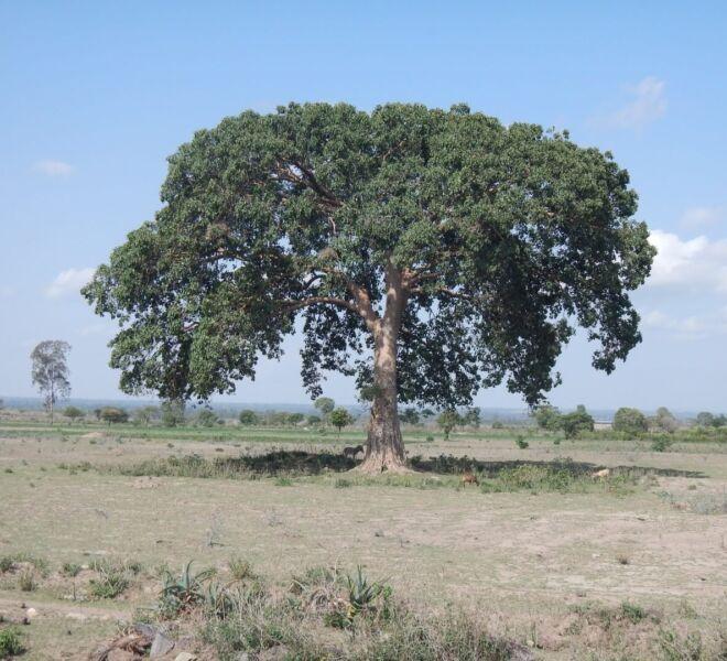 Foto 6 - DSCN3019 albero